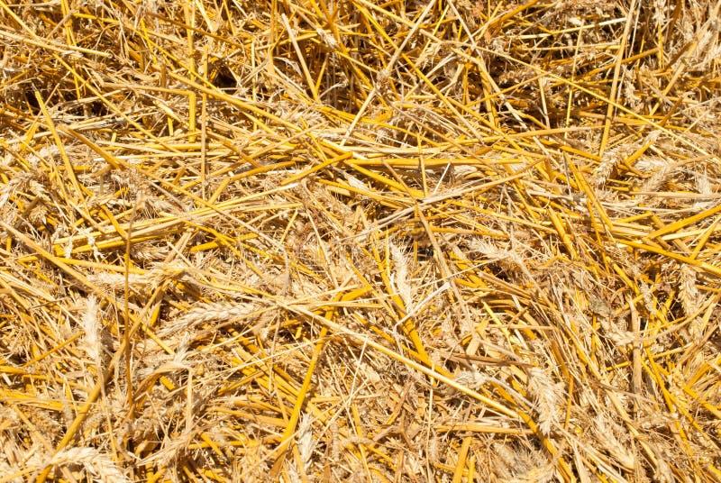 De achtergrond van het gele stro, zal het oogsten ideaal gezien de achtergrond van inscripti aanpassen stock afbeelding