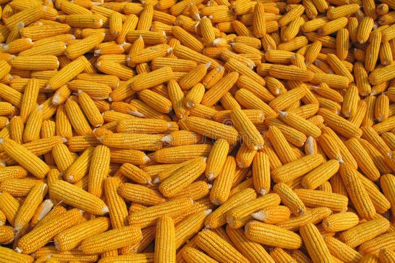 Download De Achtergrond Van Het Graan Stock Afbeelding - Afbeelding bestaande uit landbouw, markt: 29504045