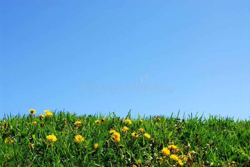 De achtergrond van het gras en van de hemel stock foto's
