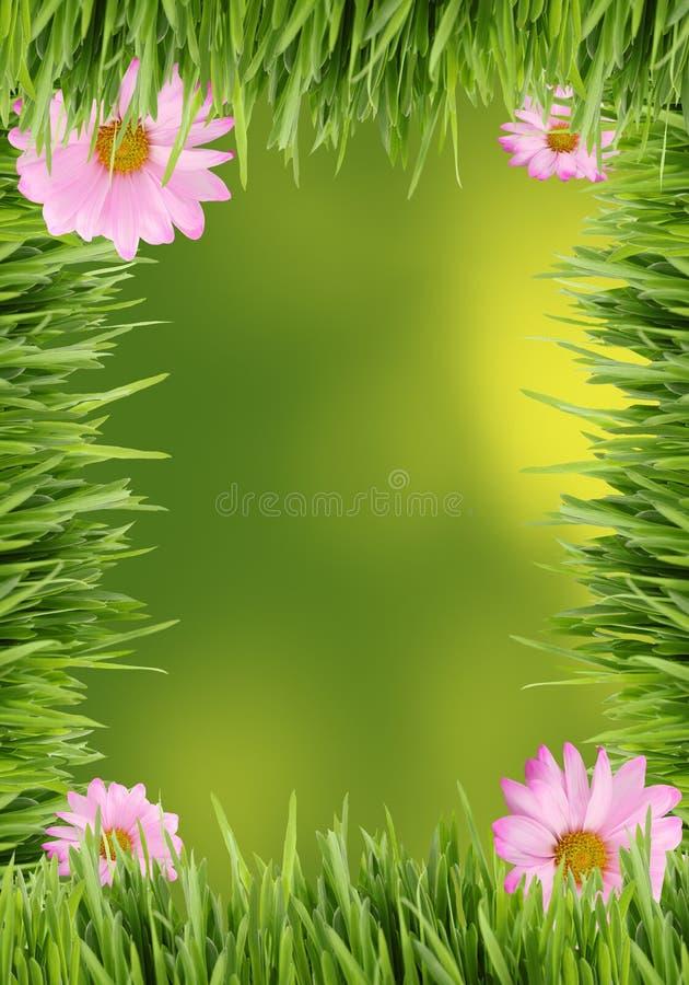 De achtergrond van het gras en van het madeliefje royalty-vrije stock foto