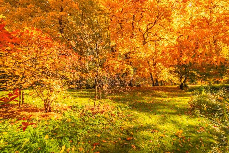 De achtergrond van het de herfstlandschap Het panorama van de dalingsscène stock fotografie