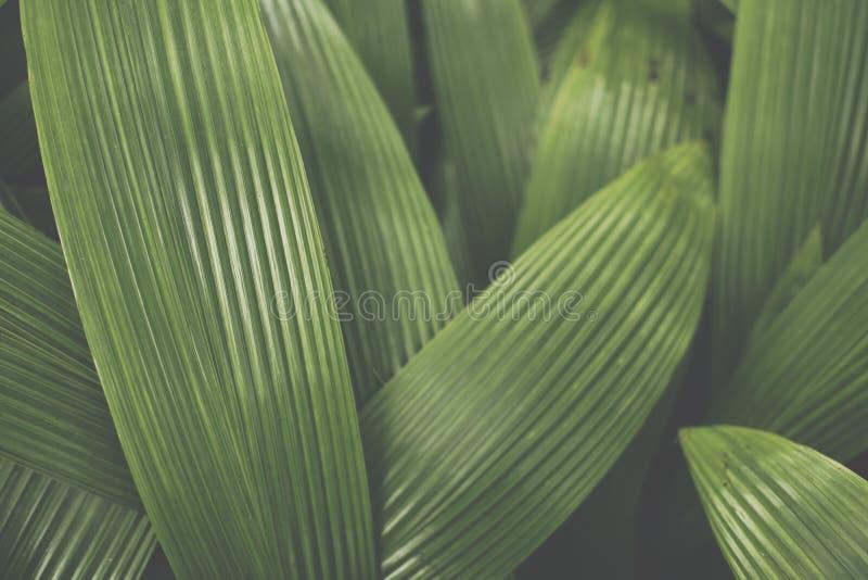 De achtergrond van het installatieblad De boom verlaat patroon groene gebladertecreati royalty-vrije stock afbeelding