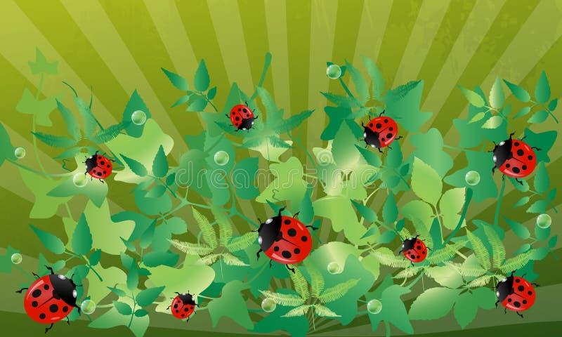 De achtergrond van het lieveheersbeestje. royalty-vrije illustratie