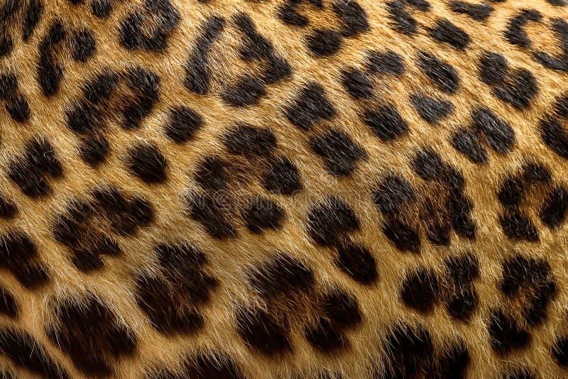De achtergrond van het luipaardbont royalty-vrije stock afbeeldingen