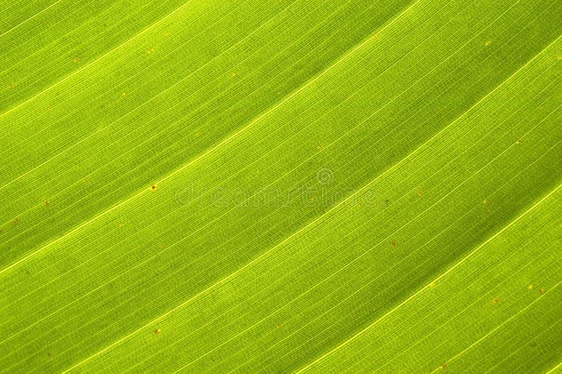 De Achtergrond van het palmblad royalty-vrije stock foto's