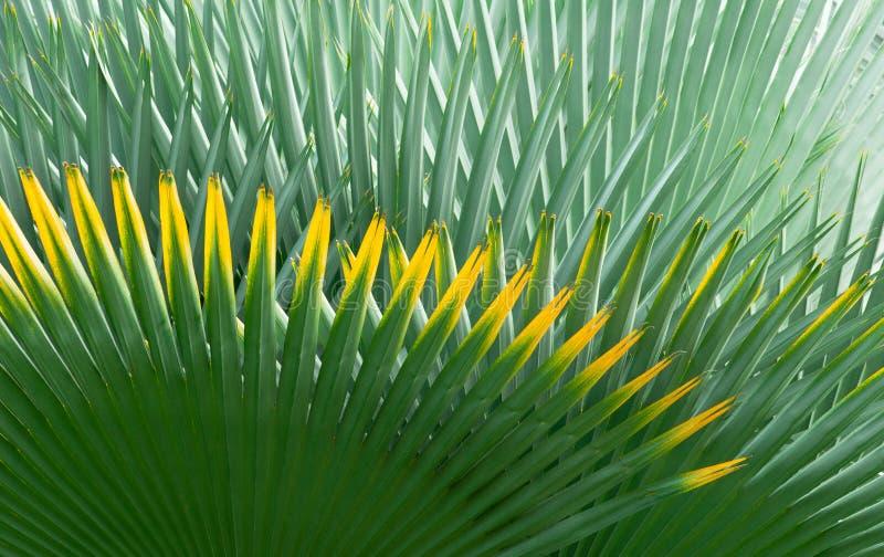 De Achtergrond van het palmblad royalty-vrije stock afbeeldingen