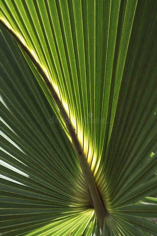 De Achtergrond van het palmvarenblad royalty-vrije stock foto