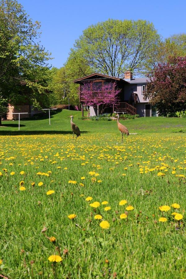 De achtergrond van de het wildaard van Wisconsin met kraanvogels in een stad stock afbeelding