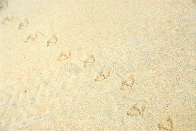 De achtergrond van het zand stock foto