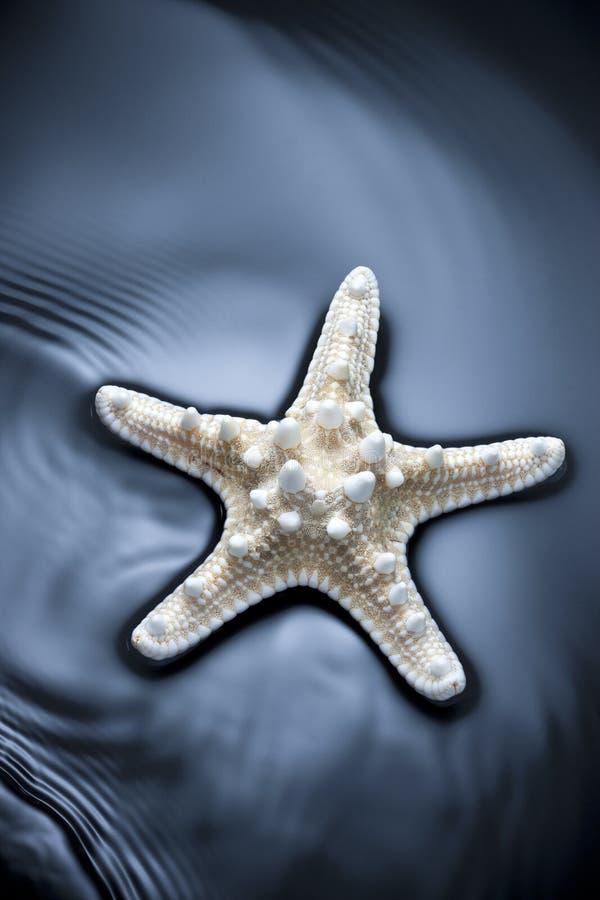 De Achtergrond van het zeesterwater royalty-vrije stock fotografie