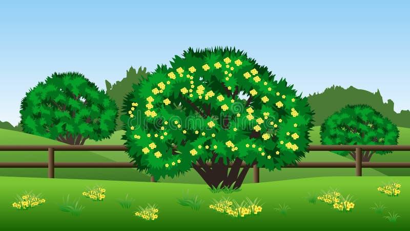 De achtergrond van het de zomerlandschap met groen bomen, heuvels, gras en y vector illustratie