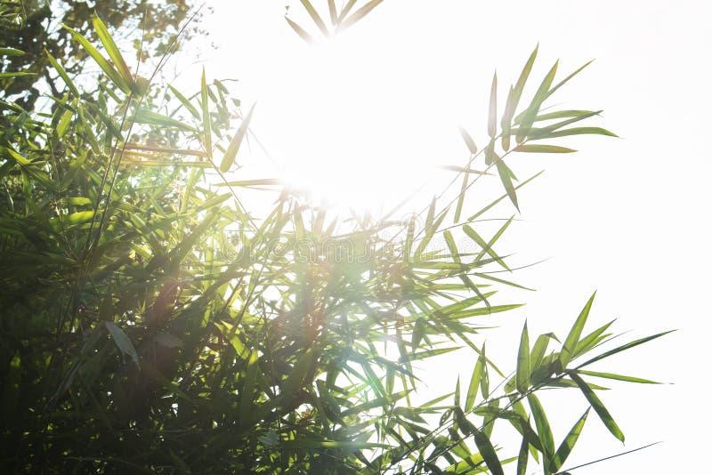 De achtergrond van de het zonlichtaard van de bladboom royalty-vrije stock afbeelding