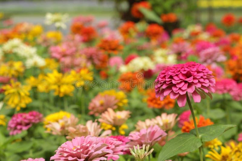 De achtergrond van de kleurrijke bloemen in park, gelukkig op h royalty-vrije stock foto's