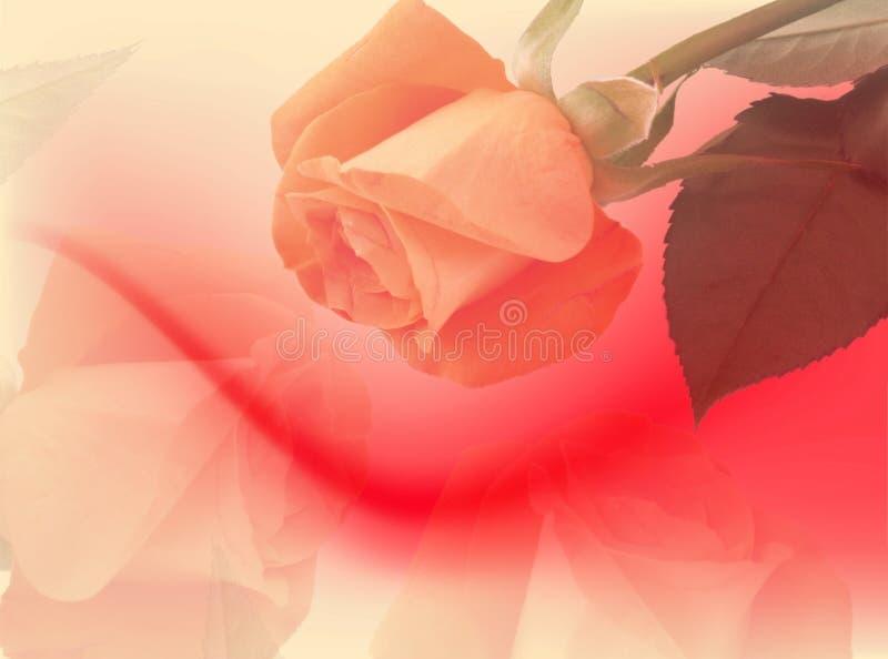 De achtergrond van rozen stock illustratie