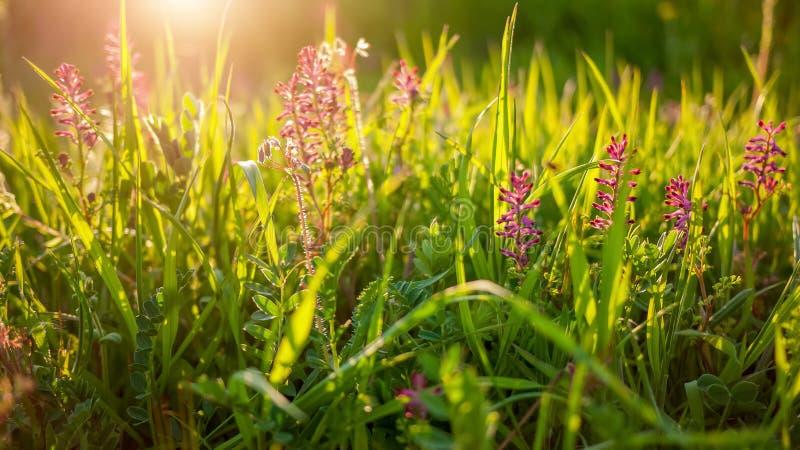 De achtergrond van de Sringsaard met groene gras en bloemen stock fotografie
