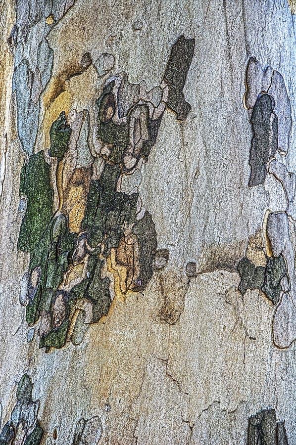 De achtergrond van sycomoortexturen Vlotte boomboomstam Groene, blauwe, bruine en gele vlekken stock foto