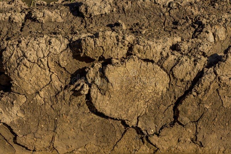 De achtergrond van de textuur - droog gebarsten bruine aarde royalty-vrije stock afbeeldingen