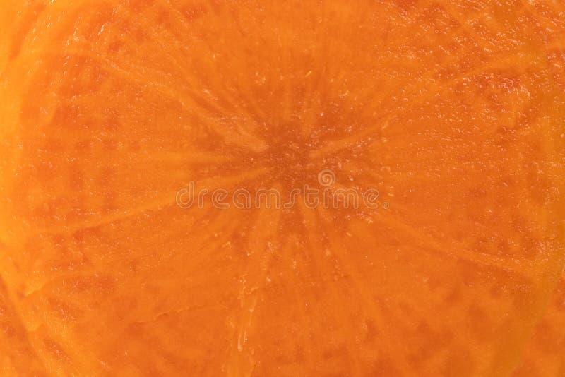 De Achtergrond van de wortelplak stock foto's