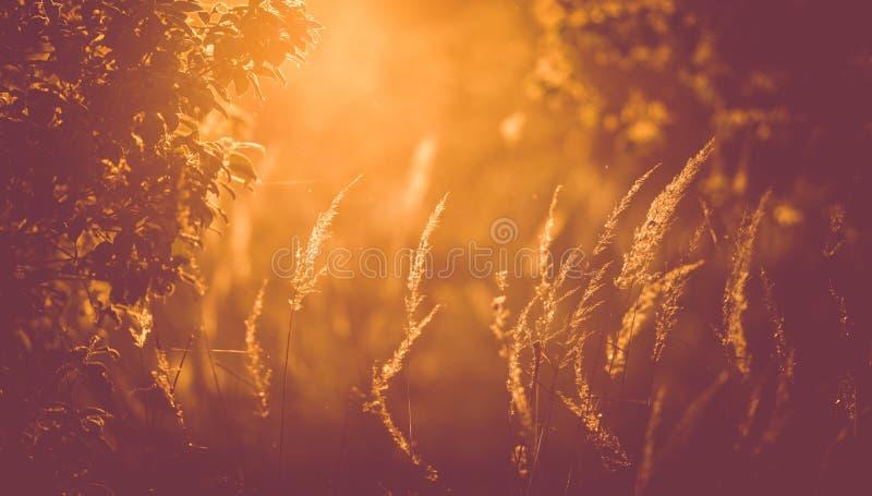 De achtergrond van de de zomerzonsondergang stock fotografie
