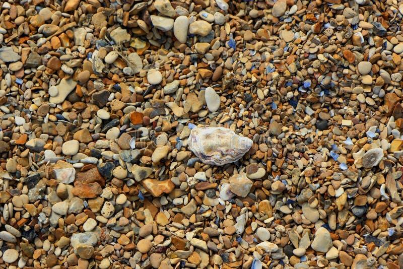 De achtergrondafbeelding met a pebbled strand en oude shells royalty-vrije stock fotografie