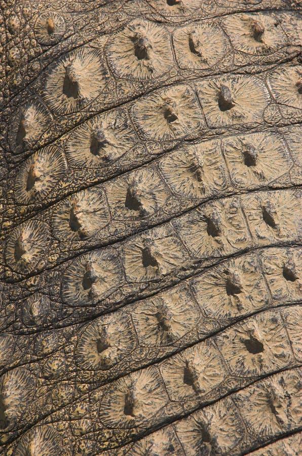 De achterhuid van de krokodil stock foto's