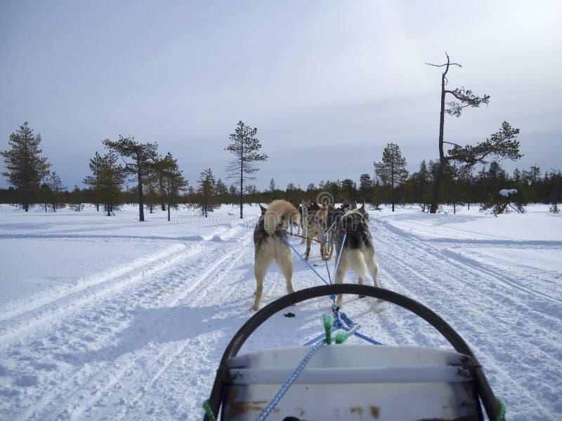 De achtermening van honden die op sneeuw sledding behandelde landschap tegen duidelijke hemel in gesneeuwd bos royalty-vrije stock afbeeldingen