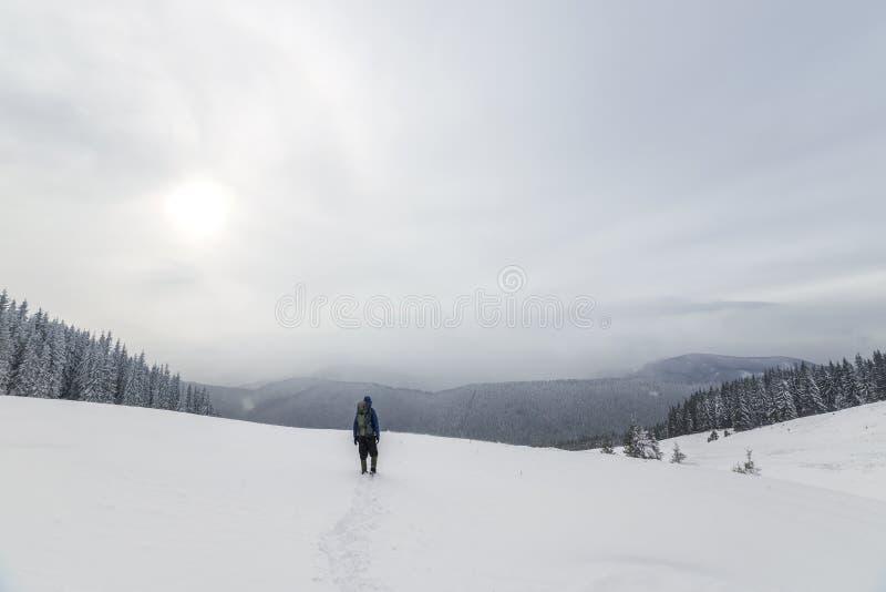 De achtermening van toeristenwandelaar in warme kleding met rugzak die stijgende bergen lopen behandelde met sneeuw op nette bos  stock afbeeldingen
