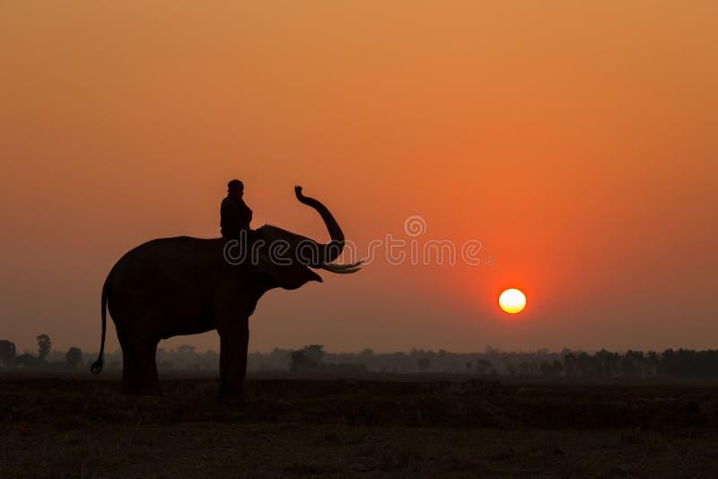 De actie van de silhouetolifant en mahout royalty-vrije stock foto