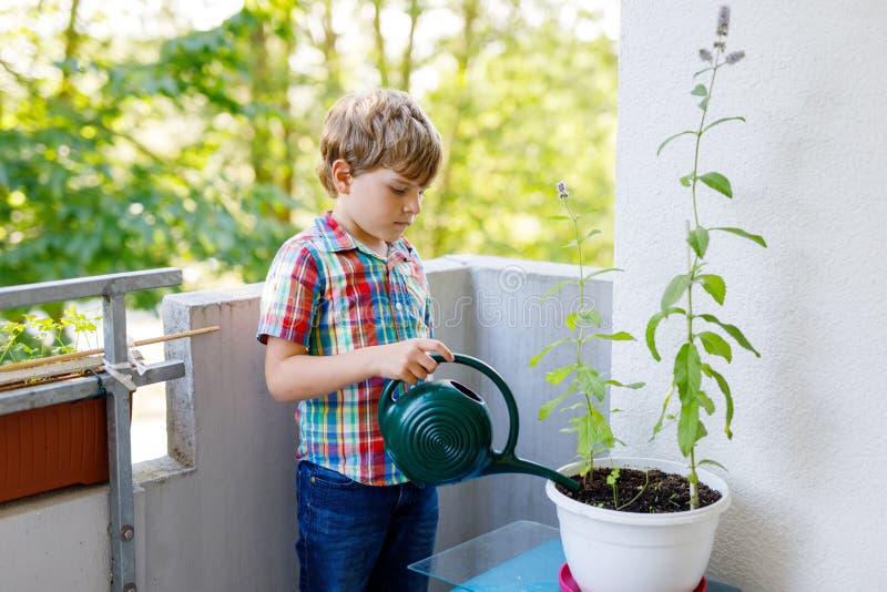De actieve weinig peuterjong geitjejongen het water geven installaties met water kunnen thuis op balkon stock afbeeldingen