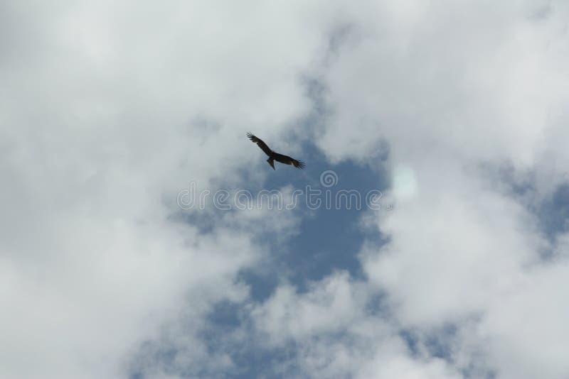 De adelaar in de hemel stock foto's