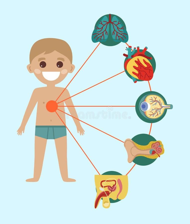 De affiche van de jong geitjegezondheid met menselijk lichaamsanatomie royalty-vrije illustratie