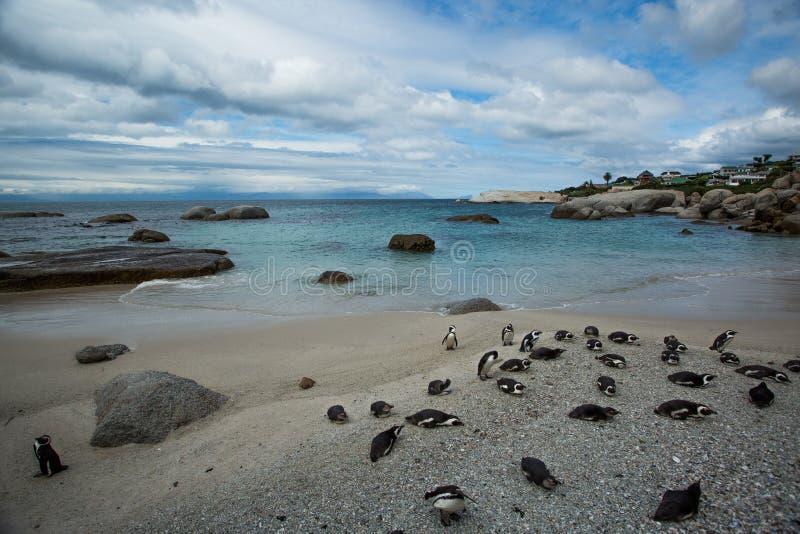 De Afrikaanse Pinguïnen op Robben Eiland Kaapstad zo stock foto