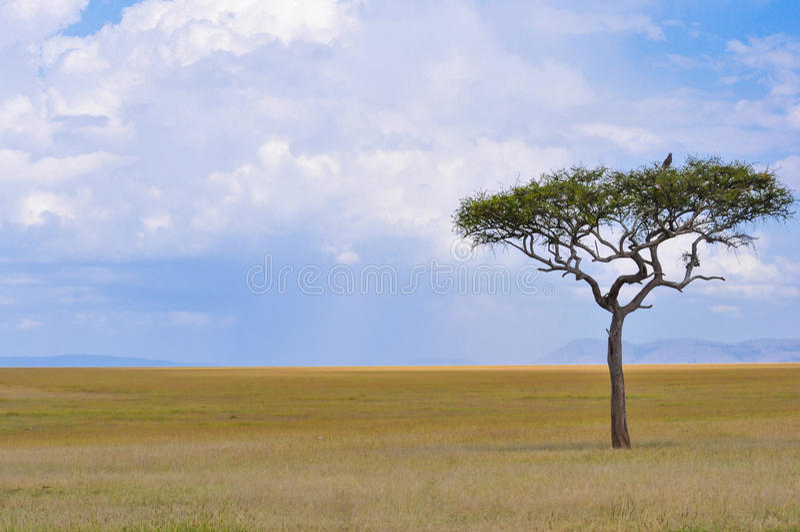De Afrikaanse Savanne royalty-vrije stock afbeelding