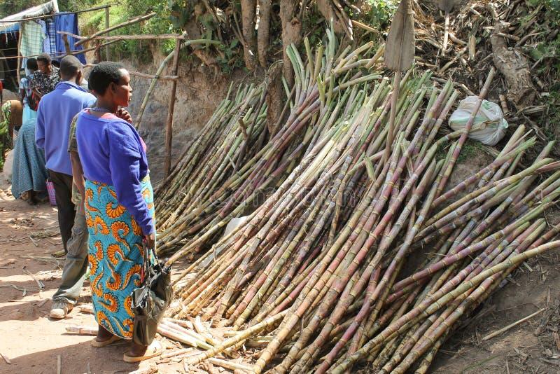 De Afrikaanse vrouw kiest suikerriet op de markt. stock fotografie