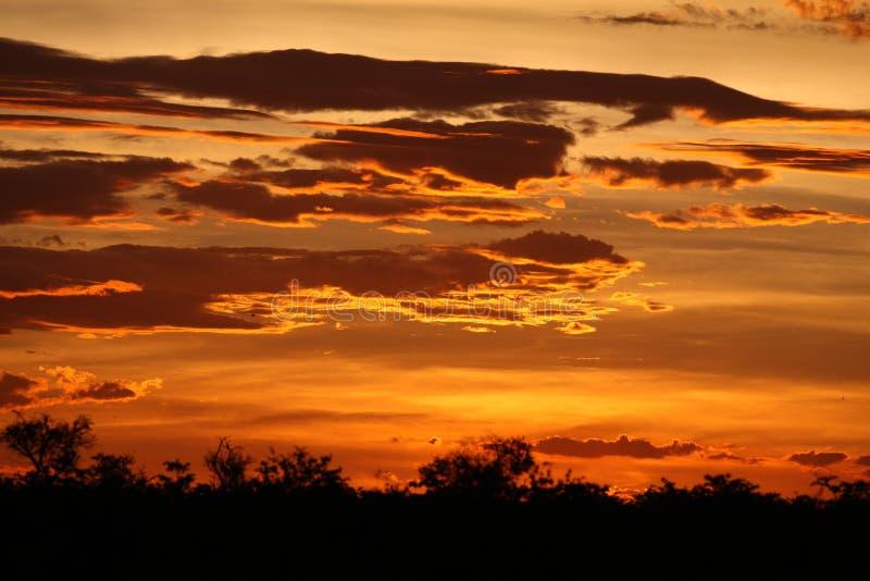 De Afrikaanse wilde safari Tanzania Rwanda Botswana Kenia van de savannezomer royalty-vrije stock foto