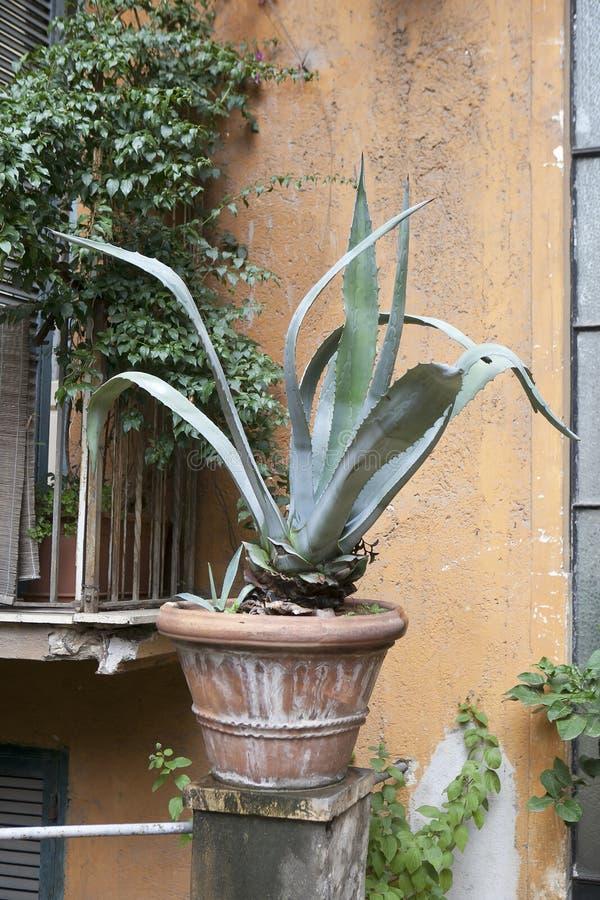 De agave in de pot versiert de ingang aan het huis in Rome royalty-vrije stock foto's