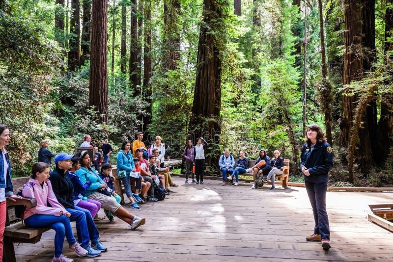 10 de agosto de 2018 valle del molino/CA/los E.E.U.U. - voluntario en Muir Woods National Monument que da una presentación a un g imagen de archivo libre de regalías