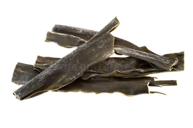 De Algen van Kombu royalty-vrije stock afbeeldingen