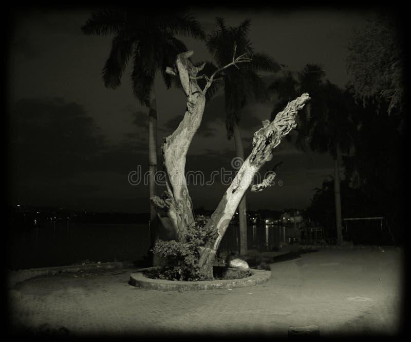 De alleen boom stock foto