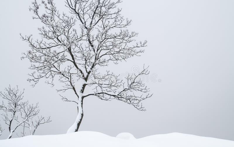 De alleen boom van de tribune royalty-vrije stock foto