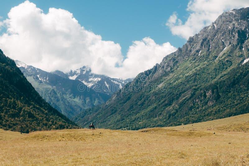 De alleen tribunes van de ruitercowboy in gele weide op groen berglandschap royalty-vrije stock foto