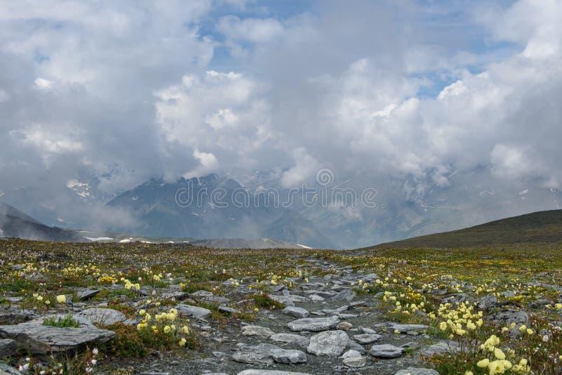 De alpiene bloemen kweken hoogte in de bergen royalty-vrije stock fotografie