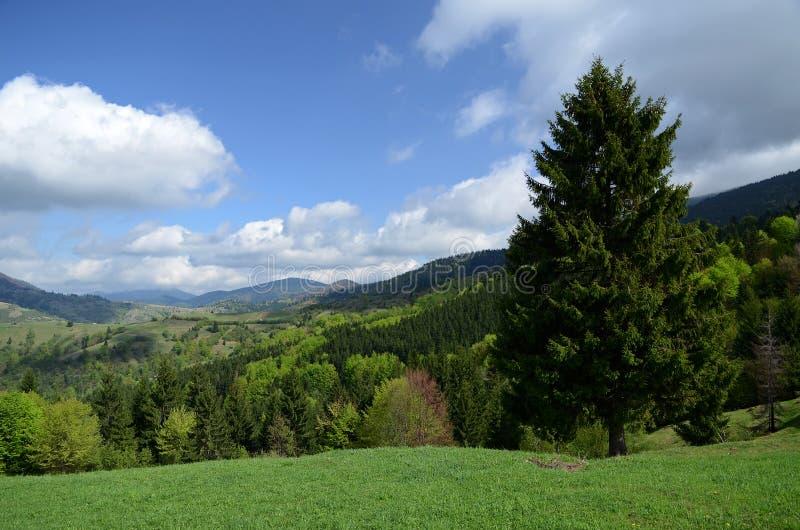 De alpiene randen van de Karpatische Bergen worden omringd door eeuw-oude bossen op de achtergrond van de blauwe hemel met wit stock fotografie