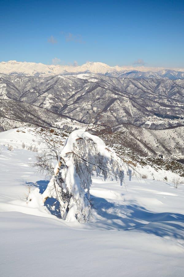 Download De Alpiene Scène Van De Winter Stock Foto - Afbeelding bestaande uit schoonheid, waaier: 29506050