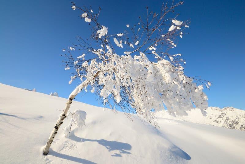 Download De Alpiene Scène Van De Winter Stock Afbeelding - Afbeelding bestaande uit blauw, berk: 29506061