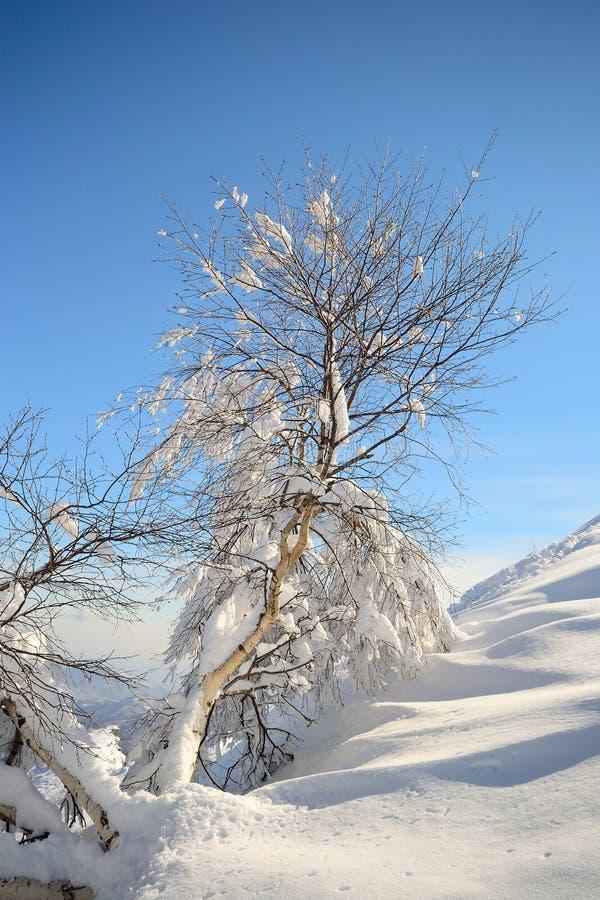 Download De Alpiene Scène Van De Winter Stock Afbeelding - Afbeelding bestaande uit vrijheid, vorst: 29507821