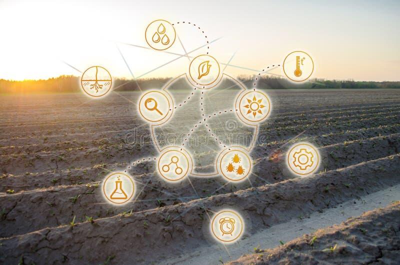 De alta tecnologia e inova??es na agroind?stria Qualidade do estudo do solo e da colheita Trabalho e desenvolvimento cient?ficos  fotos de stock