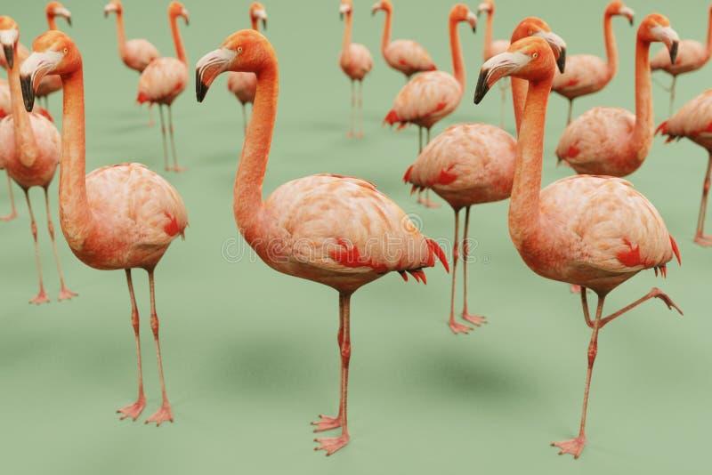 De Amerikaanse flamingo's geven terug royalty-vrije illustratie