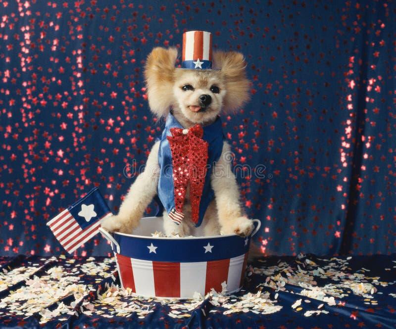 De Amerikaanse patriottische Oomsam hond geeft verkiezingstoespraak status stock afbeelding