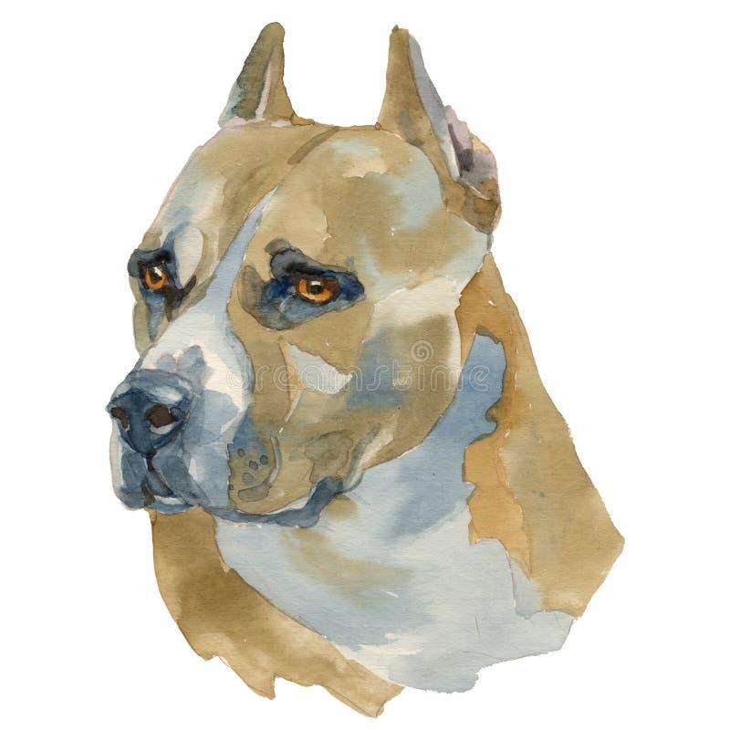 De Amerikaanse Staffordshire Terrier waterverfhand schilderde hond p vector illustratie